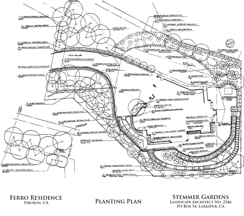 Ferro-Tiburon-001-planting-edited