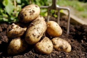 PotatoesSmall-14oinjy-300x199