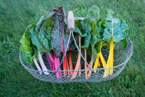 chard-in-basket-300x200